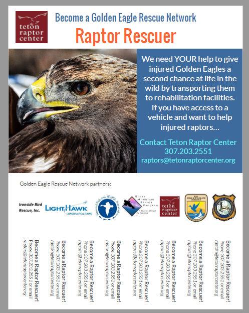Raptor Rescuer