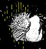 Murie Audubon Sage Grouse Logo