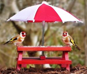 MAS Birding Picnic