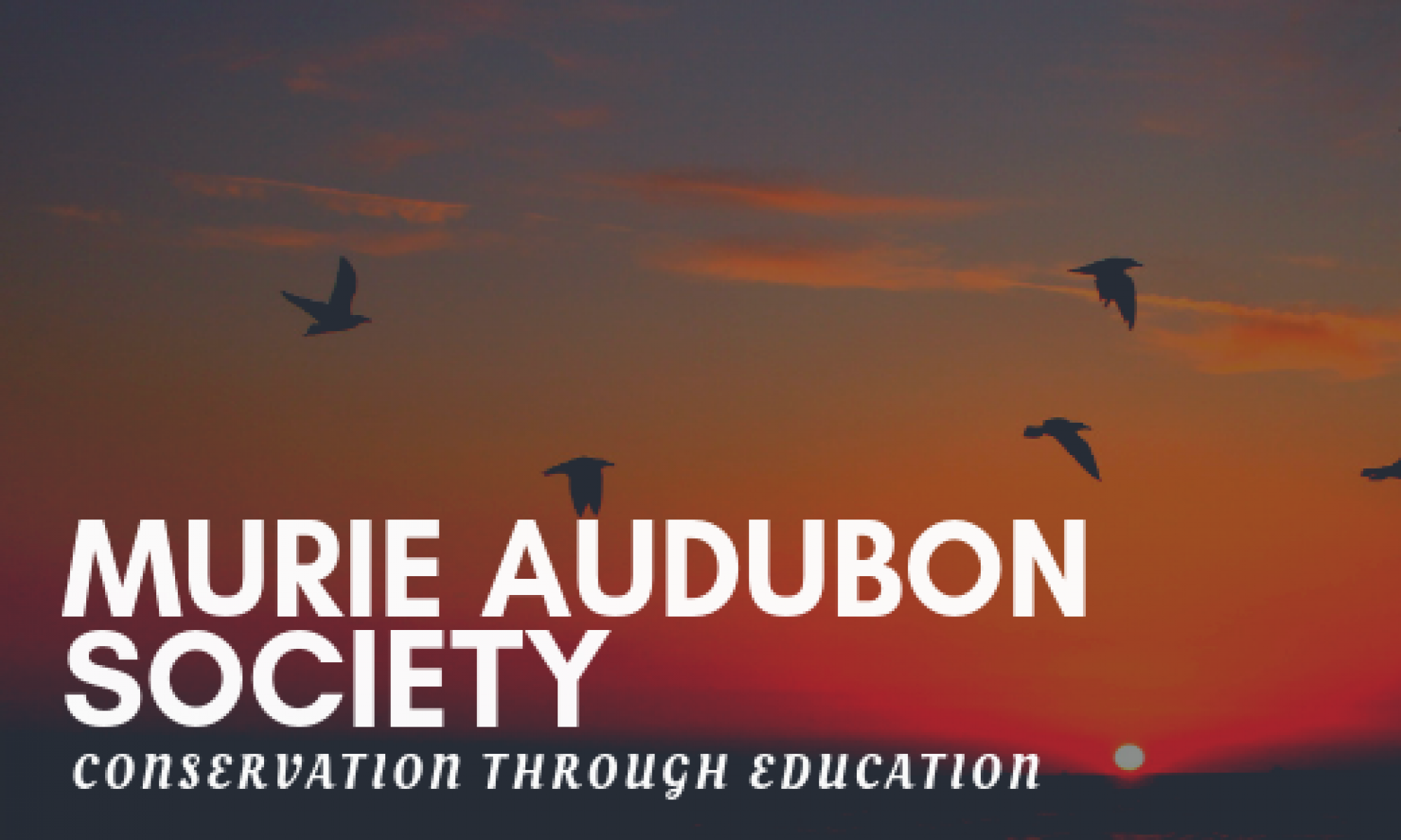 Murie Audubon Society Chapter